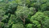 32.2도가 넘으면 열대우림이 이산화탄소 내뿜는다